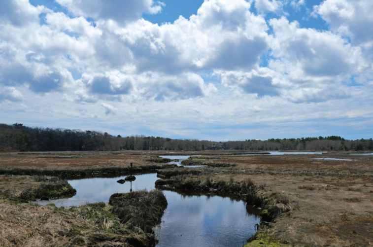 Bourne Turns To Feds For Help With Cleanup Of Estuaries